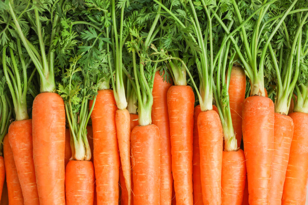 Carrots 101: Know Your Carrots Better